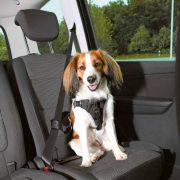 Trixie Car Harness Comfort - biztonsági hám autóba -fekete - (M) kutyák részére (50-65cm/20mm) - Autóban való utazáshoz biztonságos rögzítés