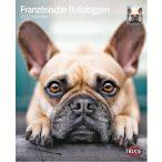 Francia Bulldog Naptár Kutyás Naptár 2021. - Francia Bulldogos Trixie Falinaptár 12 hónapos 12+1 lapos