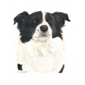 Border Collie Cuccok