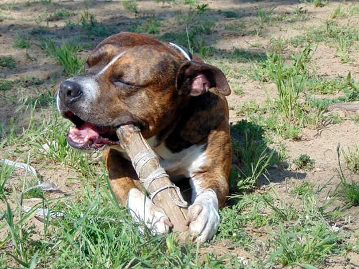A FiskePulver és a kutyánk története